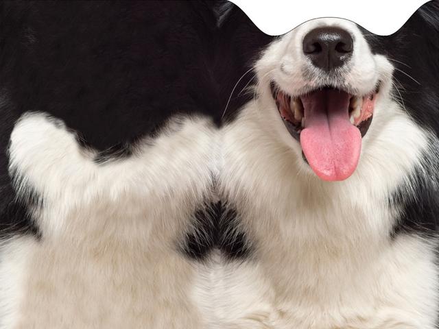 лыжная маска с принтом собаки