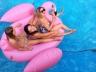 гигантский надувной матрас фламинго