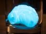 Светящийся пластилин мозг